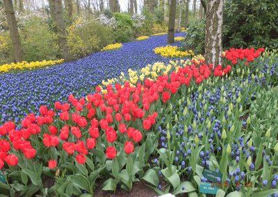 olandija-2016-04-19-24-184_800x600