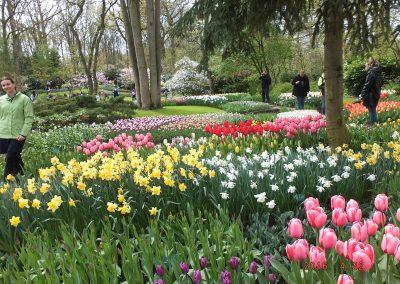 olandija-2016-04-19-24-217_800x600