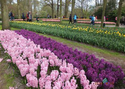 olandija-2016-04-19-24-246_800x600