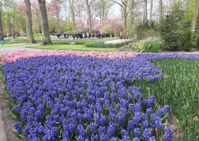 olandija-2016-04-19-24-221_800x600